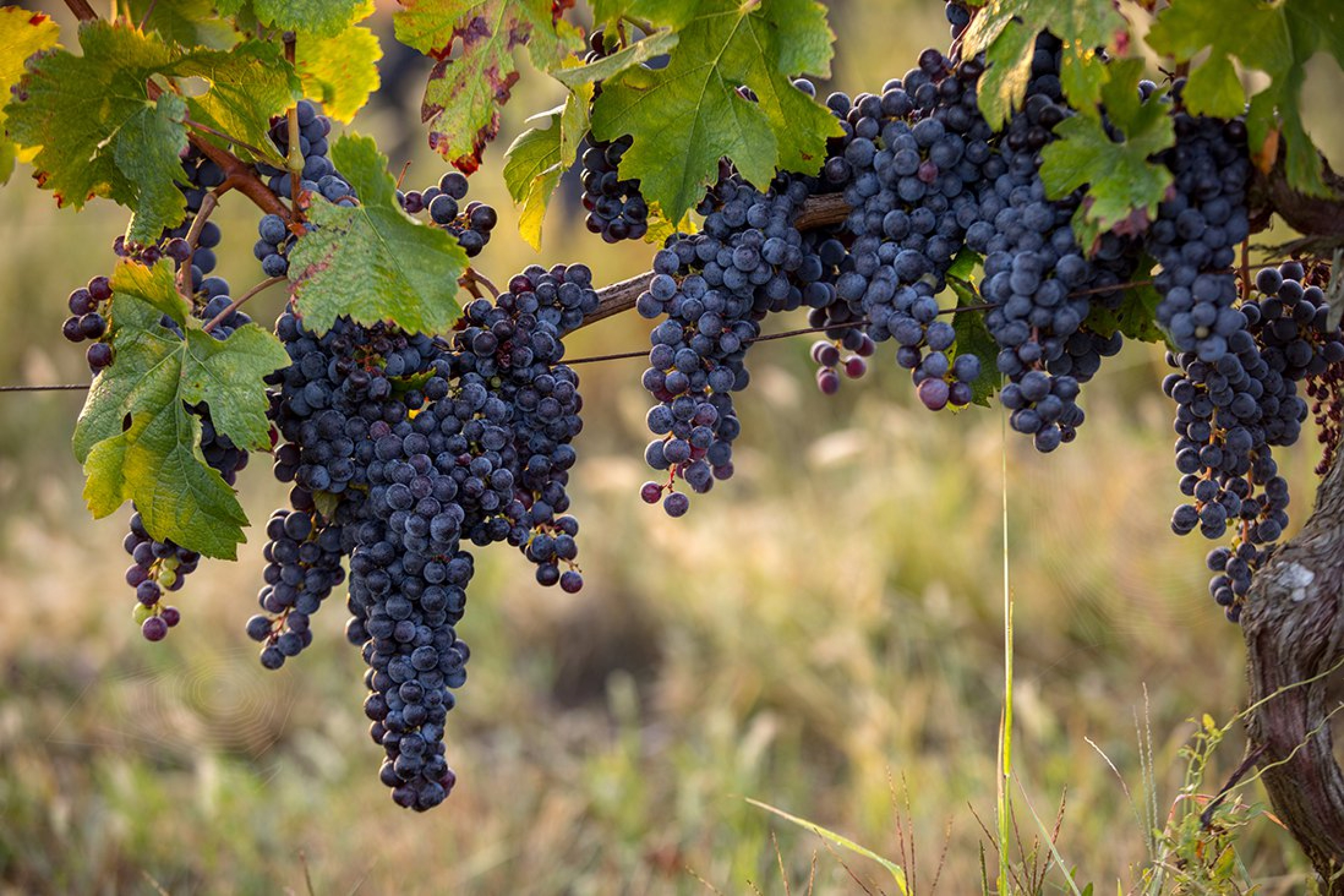 Top 10 Best French Red Wines for 2021
