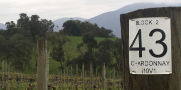 Cool and damp Yarra - perfect for Pinot and Chardonnay